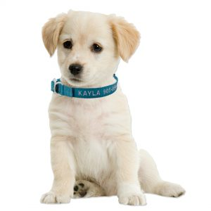 Personalized Embroidered Metal Buckle Adjustable Collars